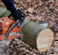 tree services near oakland county
